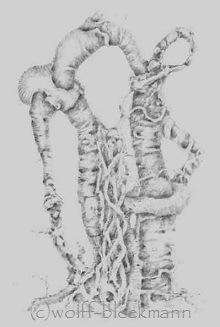 Astgeflecht 12.97-I, Graphit auf Papier 25 x 37 cm Original Ingrid Wolff-Bleekmann