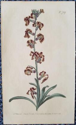 Bild mit Blume - Originalstich (handkoloriert)