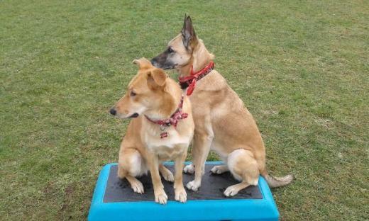 Schule für Hunde & Welpen - Bocholt
