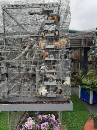 Eichhörnche-Baumstreifenhörnchen