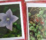 Selbstfotografierte Fotos auf Doppelkarten mit Briefumschlag und in Folie - Münster