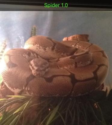 Python Regius  Spider 1.0