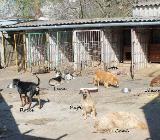 Vermittlungshilfe für Hunde in Not - Metelen