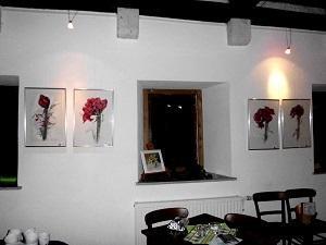 Amaryllis 3.06 V, Ölkreide auf Aquarellpapier 40 x 60 cm Original Ingrid Wolff-Bleekmann - Münster