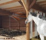Aussenboxen, Pferdeställe, Pferdeboxen, Weidehütte, Offenstall, Pferdeunterstand, Weideunterstand, Unterstand in 78600
