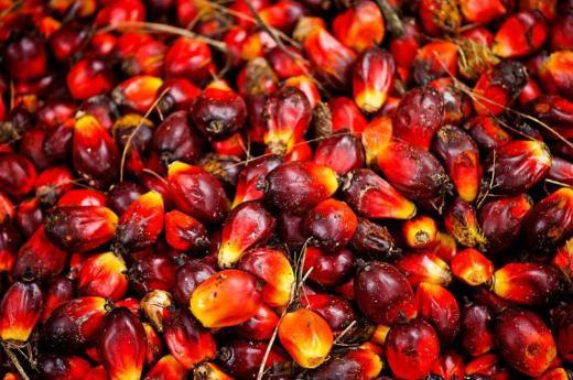 Palmöl und Sonnenblumenöl