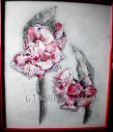Amaryllis 2012 - Ingrid Wolff-Bleekmann Ölpastellkreiden auf Aquarellpapier 50 x 60 cm Original