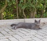 Katze vermisst - Ahlen