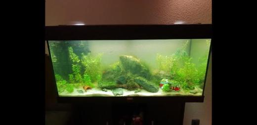Juwel Rio 180 Aquarium zu verkaufen
