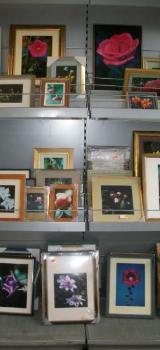 Marken-Bilderrahmen mit Fotografien, nielsen, Bussolari, Randolff - Wagenfeld