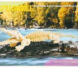 3D Puzzle Krokodil aus Holz - NEU - Scheeßel