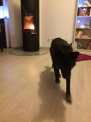 Liebe Mischlingshündin sucht ihr Zuhause - Bremen