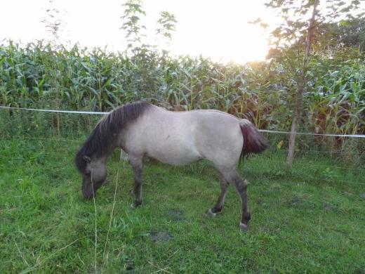 Liska (10) sucht ein neues Zuhause - Sittensen