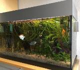 120 Liter Aquarium mit Pumpe, Heizung, Fischen, Pflanzen und Zubehör - Bremen