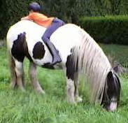Osterfeuer am Pferdeteich  für Pferdefans - Oyten