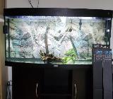 Aquarium Juwel Vision 260 Farbe schwarz mit Unterschrank - Weyhe