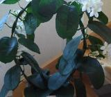 Pflanzengebinde mit Topf - Weyhe