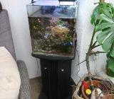 Verkaufe 60 Liter Meerwasseraquarium komplett - Cloppenburg