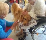 Therapiehunde-Teamausbildung - Hambergen