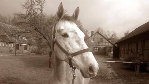 Biete Reitunterricht und alles Rund ums Pferd