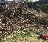 Biete Dienstleistungen im Garten an - Bakum