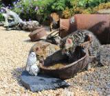 Bengalkitten suchen ab Ende August ihr neues Zuhause! - Emstek