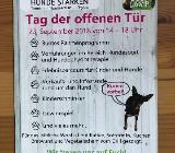 Tag der offenen Tür Hundeschule Hunde Stärken im DogsCamp in Achim - Achim