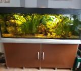Komplett Aquarium ca 400 Liter - Delmenhorst