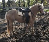 Irische Ponystute - Dötlingen