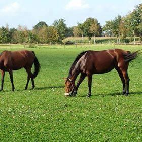 Pferdeboxen frei im Ammerland - Westerstede