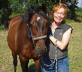 Reitbeteiligung für fein gerittenes Dressurpferd gesucht - Bremen