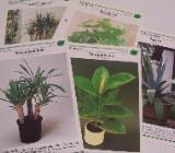 Große Zimmerpflanzen, Kübelpflanzen, Wintergarten-Pflanzen - Visselhövede