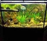 Juwel 5 Eck Aquarium 315 Liter mit Unterschrank Konstruktion - Verden (Aller)