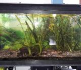 Biete an Aquarium - Weyhe