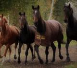 Freie Pferdeboxen und Paddockboxen auf dem Ebkenhof - Westerstede