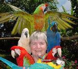Handzahme Papageien babys - Vechta
