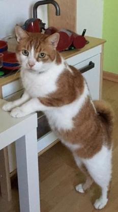 Katze entlaufen - Wangerland