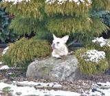 Französiche Bulldogge in Merle Cream und Brindle - Bösel