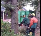Baumfällung, Baumpflege - Ganderkesee
