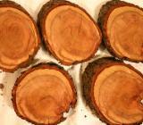 Baumscheiben einer sehr alten Zwetschge. Dekoration mit Holz - Bruchhausen-Vilsen
