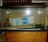 Aquarium mit Zubehör - - Osterholz-Scharmbeck