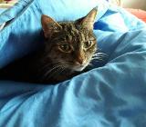 Zwei weibliche Katzen suchen dringend ein zu Hause! - Langwedel (Weser)