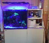 Salzwasseraquarium inkl. Tiere zu verkaufen! - Neuenkirchen (bei Bassum)