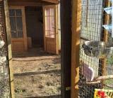 Tier Zäune (  Gehege ) zu verkaufen - Ritterhude