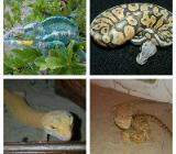 auffangstation für Reptilien - Nordenham