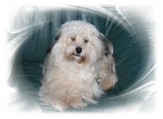 Tierbetreuung Urlaubbetreuung für kleine Hunde und Kleintiere - Stuhr