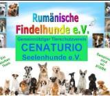 Spenden für den Tierschutz - Loxstedt