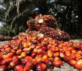 Palmöl roh und raffiniert - Martfeld