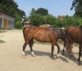 Geburtstag auf dem Pferdehof feiern. - Bassum