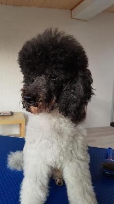 Hundefrieseur / Hundesalon - Verden (Aller)